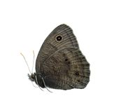 Common wood nymph butterfly. Isolated on white Stock Photos