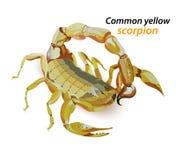 Common yellow scorpion. Illustration common yellow scorpion on a white background Stock Photography