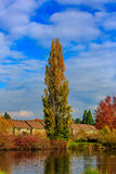 Commonwealth Lake Park. Colorful tree leaves by the lake, in Commonwealth Lake Park, Beaverton, Oregon Royalty Free Stock Photo