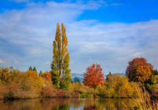 Commonwealth Lake Park. Colorful tree leaves by the lake, in Commonwealth Lake Park, Beaverton, Oregon Stock Photography