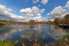 Commonwealth Lake Park in Beaverton Oregon USA. Commonwealth Lake Park with ducks in the lake in Beaverton Oregon on a beautiful fall day USA America Royalty Free Stock Photo