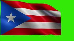 Commonwealth of Puerto Rico, Flag of Puerto Rico - LOOP stock video
