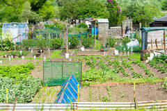 Communal allotments in Suffolk, England. Royalty Free Stock Photography