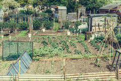 Communal allotments in Suffolk, England retro filter applied Royalty Free Stock Images