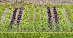 Communautaire plantaardige toewijzing met rijen van sla en goudsbloembloemen Stock Afbeeldingen