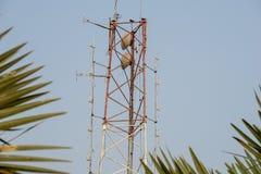 Communicatie post met zo vele frequentie radioantennes stock afbeelding