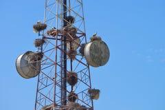 Communicatie toren blauwe hemel Stock Foto's