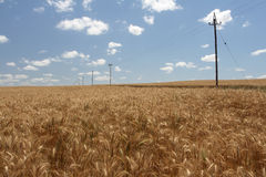 Communication. Telephone lines running through a wheat field Stock Photo