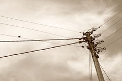 Communication. Old telephone-pole with swallow, in sepia Royalty Free Stock Image