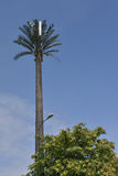 Communication antennas on fake palm tree Stock Images