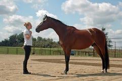 Communication avec le cheval Images libres de droits