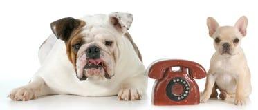 Communication de chien photographie stock
