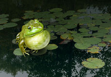 Communication Skills. Concept as a green frog making sounds with its throat lying on a lotus leaf in a natural fresh water pond as a symbol of marketing and Stock Photography