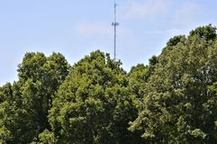 A Communication Tower Poking Above Trees royalty free stock image