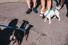 Communication of two dogs on the street. Active games and fun royalty free stock images