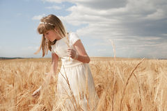 Communion between spikes. Girl wearing first communion dress among the spikes of barley Royalty Free Stock Images