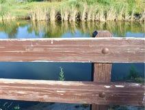 Community住宅湖作为有鸭子的一个后院 免版税库存图片