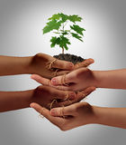 Community Cooperation. Concept and social crowdfunding investment symbol as a group of diverse hands nurturing a sapling tree with roots wrapped and connecting Stock Photography