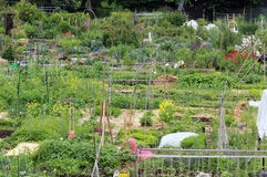 Community Garden. A beautiful community garden filled with flowers and vegetables stock images