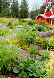 Community Garden. Raised beds filled with flowers and vegetables in a small community garden stock photo