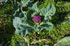 Community garden Stock Photo