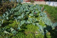 Community garden Stock Images