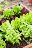 Community garden Royalty Free Stock Photography