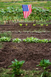 Community garden Stock Photography