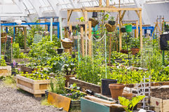 Community garden in Inuvik. The community garden in Inuvik, Northwest Territories in the Canadian arctic where a variety of plants and vegetables are grown stock image
