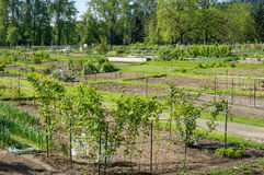 Community garden laid out in plots. A community shared garden area with food growing royalty free stock photography