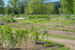 Community garden laid out in plots Royalty Free Stock Photos