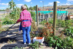 Community garden. Stock Images