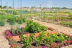 Community Garden Plot. An plot of organic vegetables surrounded by flowers in a community garden for city dwellers stock photography