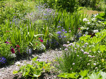 Community garden plot. Sunny garden spot in community garden with herbs, vegetables and flowers Royalty Free Stock Image