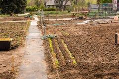 Community garden Stock Photography