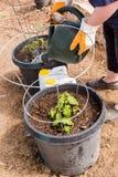 Community garden Stock Image