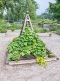 Community Garden Royalty Free Stock Photo