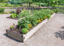 Community Garden Royalty Free Stock Photography
