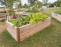Community Garden Stock Image