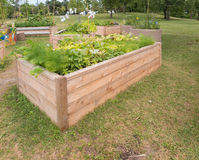 Community Garden Royalty Free Stock Photos