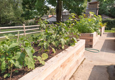 Community Garden Stock Images