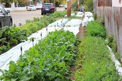 Community. Garden in Saskatoon Stock Photos