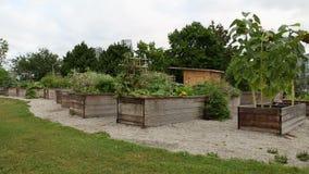 Community Garden, Vancouver stock video