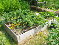 Community Garden. Vegetables growing in community garden stock photos