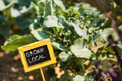 Community garden Stock Photos