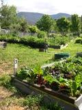 Community Garden Stock Photos