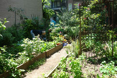 New York City Community Garden Stock Photos