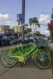 Community Rental Bicycles at a Bus Stop in Scottsdale Arizona Stock Images