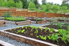 Community vegetable garden. Boxes stock image