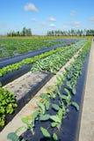Community vegetable garden Stock Photos